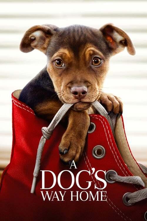 movie cover - A Dog