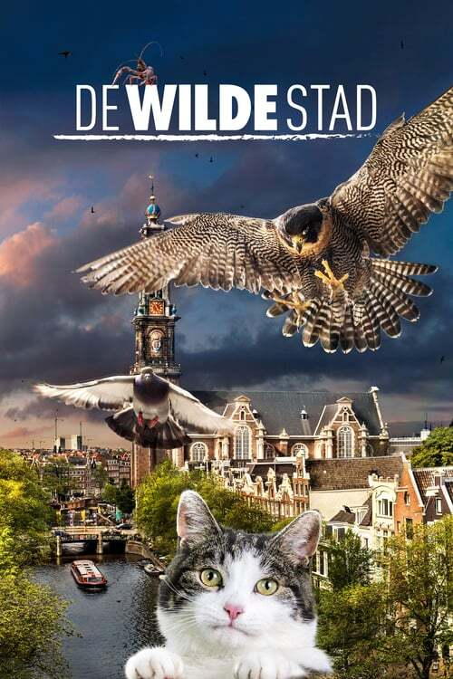 movie cover - De Wilde Stad