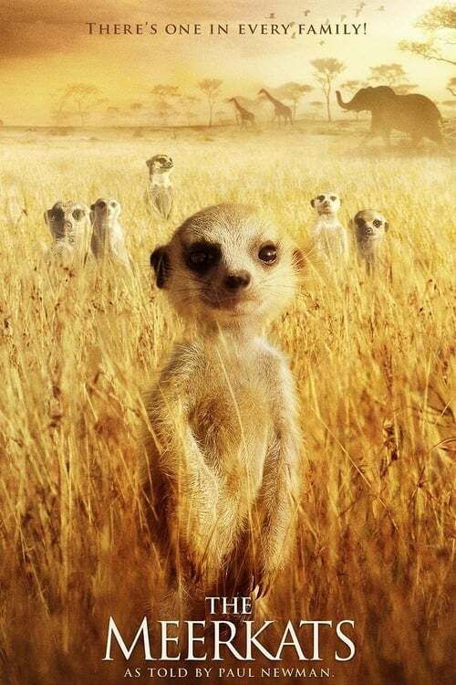 movie cover - The Meerkats