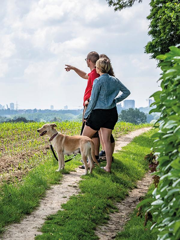 Koppel met hond kijkt over de stad vanuit de groene rand
