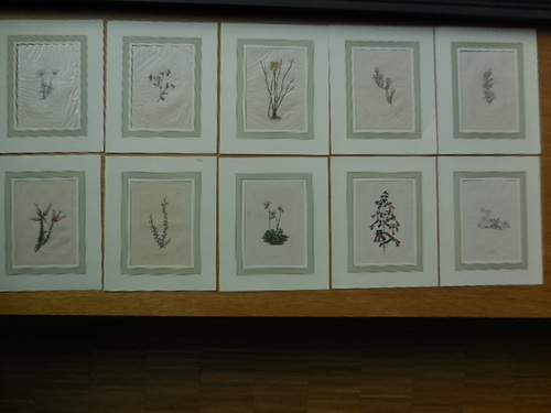 thumbnails bij product Coloured delineations of plants
