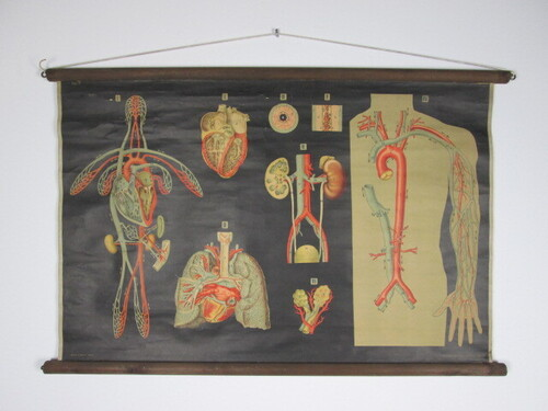 thumbnails bij product old medical chart: the blood circulation