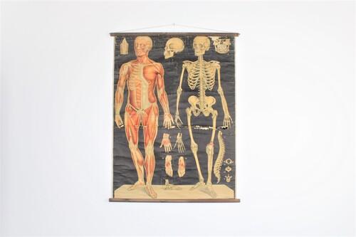 thumbnails bij product anatomische schoolplaat menselijk lichaam
