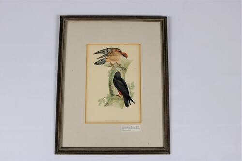 thumbnails bij product une gravure colorée du faucon, 19e siècle
