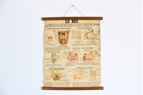 thumbnails bij product old medical school chart