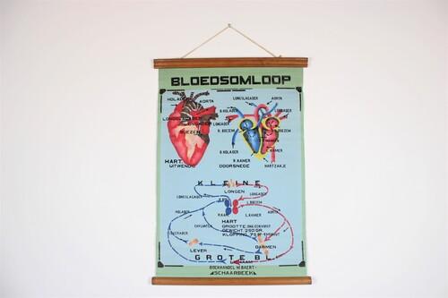 thumbnails bij product Oude medische schoolplaat