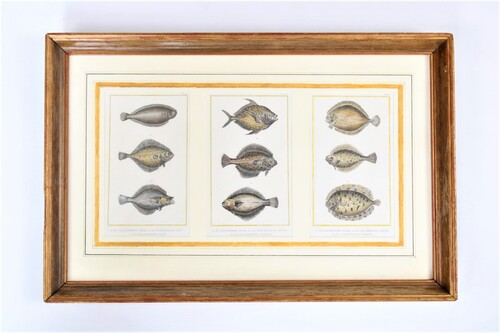 thumbnails bij product 3 steel engravings of flatfish, 19th century