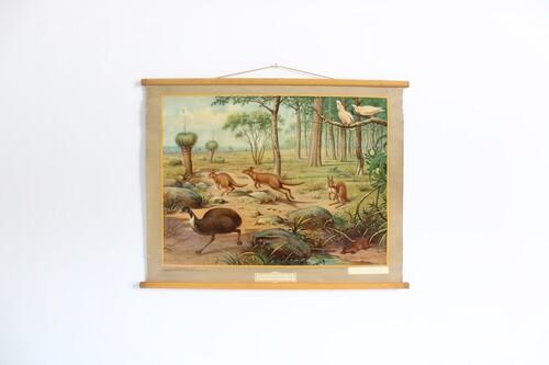 """thumbnails bij product carte scolaire """"Uit de Australische dierenwereld"""""""