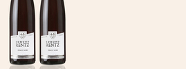 2019 Pinot Noir, Edmond Rentz, Alsace AOC, Elzas, Frankrijk