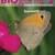 Biogenie 2 leerwerkboek
