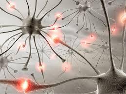 foto bij artikel Bevatten autistische hersenen te veel verbindingen?